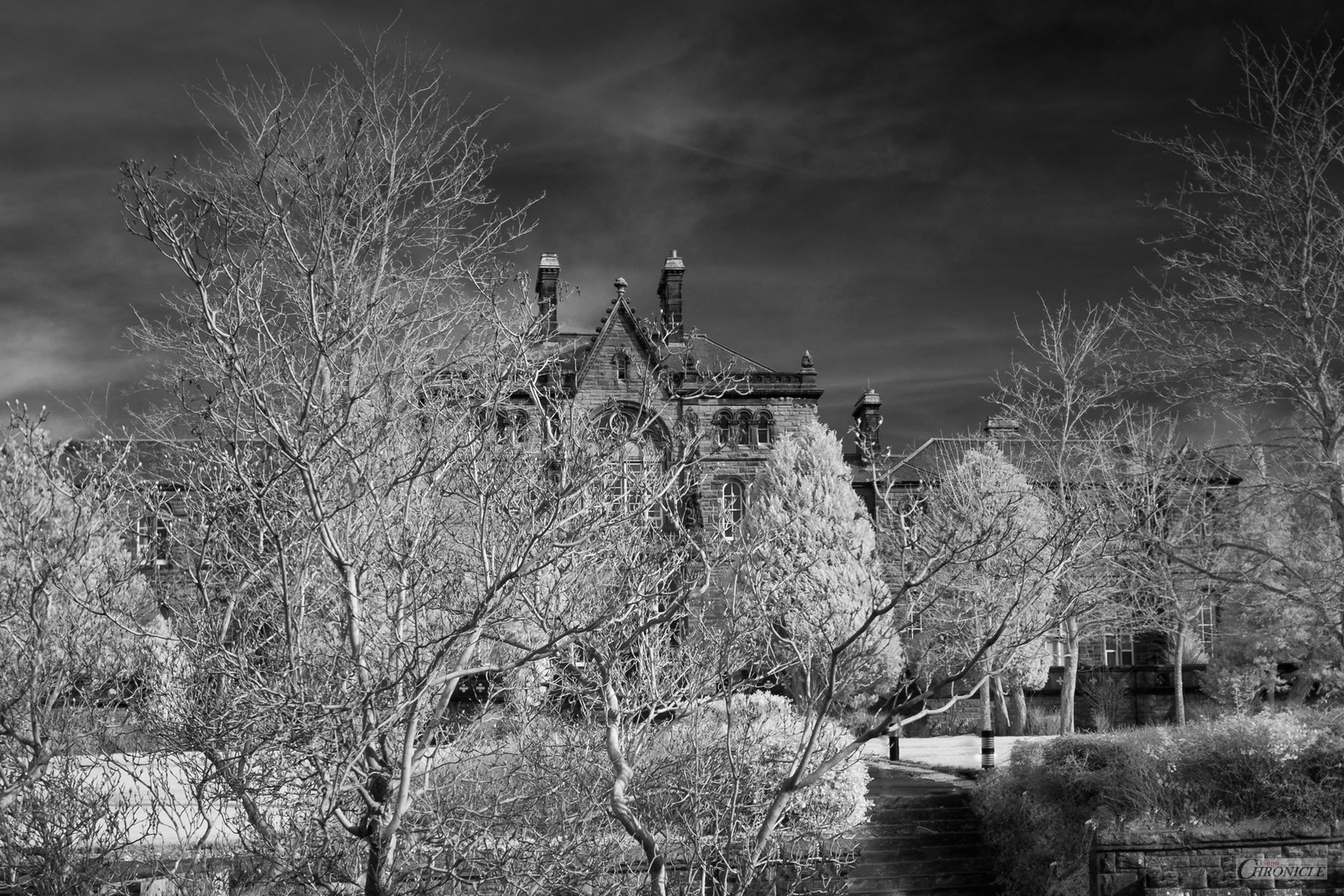 First Shot from Ricoh GR 450nm Conversion | 715nm Infrared | 35